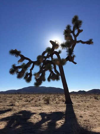 Twentynine Palms, Kalifornia: photo1.jpg