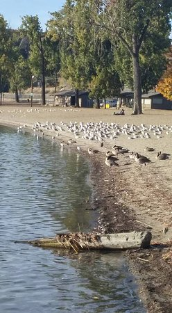 Vernon, Canada: Birds on the beach