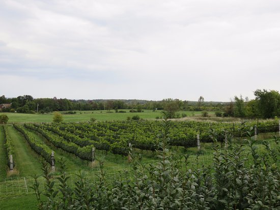 Grey County, Canadá: Coffin Ridge vineyard