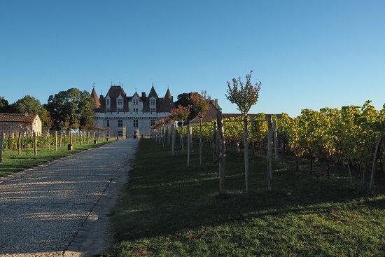 Monbazillac, Γαλλία: L'allée menant au chateau