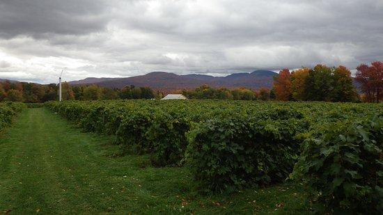 Sutton, Canadá: Vue du vignoble