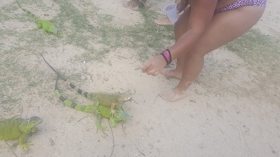 Oyster Pond, Sint Maarten: Feeding the Iguanas