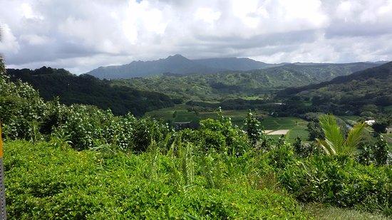 Kilauea, HI: paesaggiio