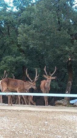 Bourazani Wild Life Resort:  Περιβαλλοντικό Πάρκο Μπουραζάνι