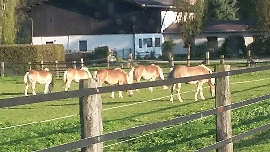 Weer, Avusturya: 20160926_173606_large.jpg