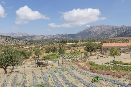 Malia, Hellas: Those views!