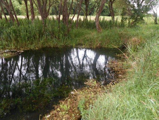 Newbridge, أيرلندا: Start of canal feeder at the fen