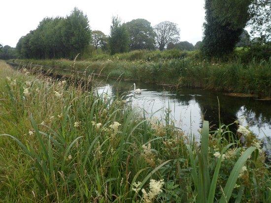 Newbridge, Irlanda: Swan glides through the water