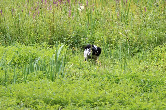 Lee Valley Regional Park: Baxter in the reeds at Lee Valley Country Park