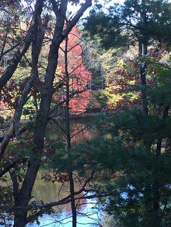 Foto de Rice Lake