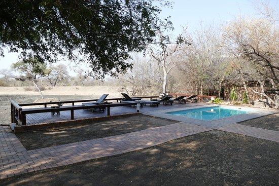 Gomo Gomo Game Lodge: zwembad met uitzicht op drinkpoel