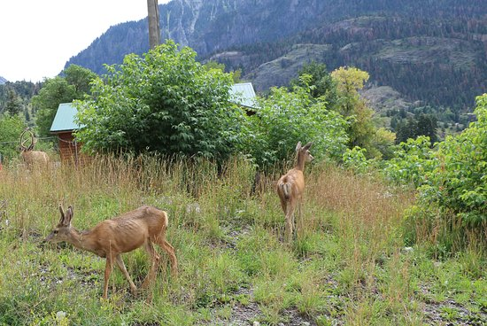 Lower Cascade Trail and Falls: Deer near the falls