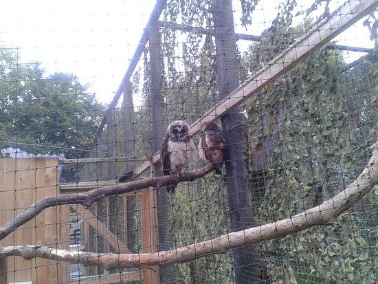 Randalstown, UK: noisey click owl