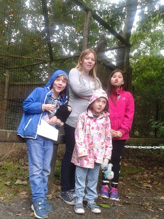 Randalstown, UK: the owl kids