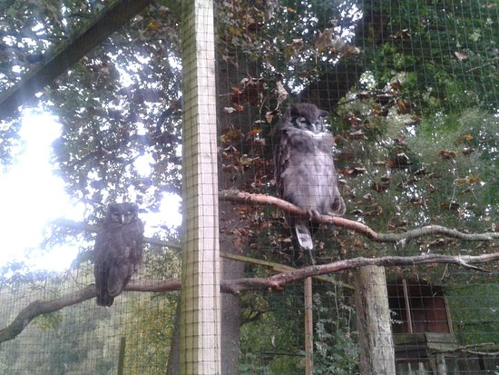Randalstown, UK: the ould owls
