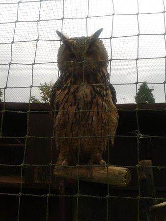 Randalstown, UK: owl lad