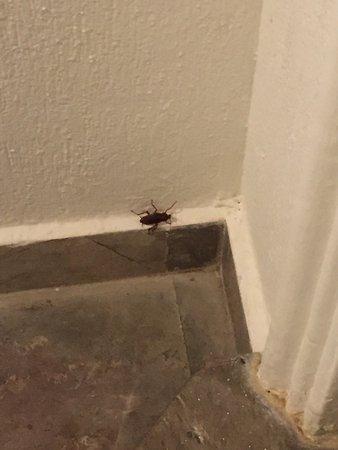 Hotel Casa Turquesa: Cockroaches