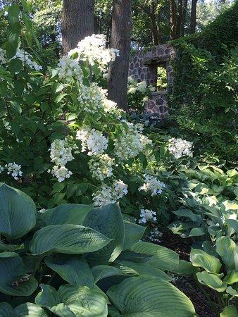 Hosta garden - Picture of Green Bay Botanical Garden, Green Bay ...