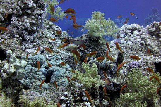 Four Seasons Resort Sharm El Sheikh: Diving on Ras Ghazlani