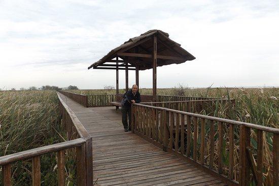 Colonia Carlos Pellegrini, الأرجنتين: Paserlas