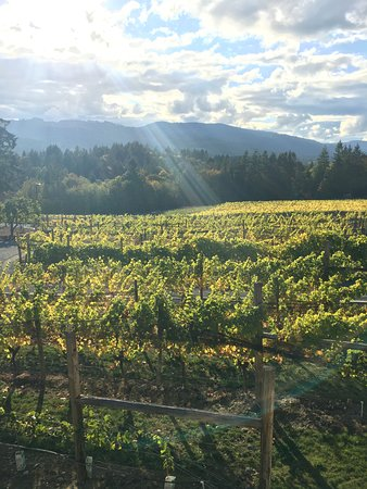 Duncan, Canadá: The vineyard on an early fall day