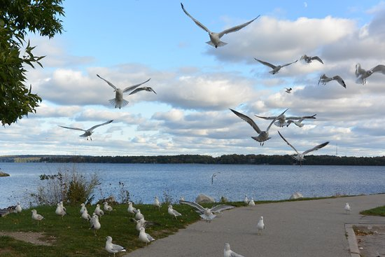 Barrie, Canada: Beautiful waterfront!
