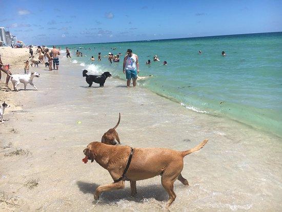 The same Miami haulover beach florida consider