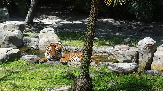 Palm Beach Zoo Is Home To Four Malayan