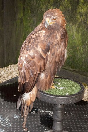 The Cornish Birds of Prey Centre