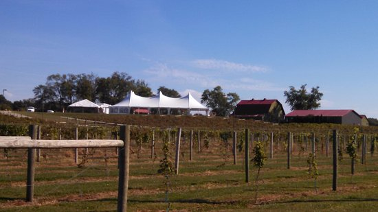 Chateau de Pique Winery: The tent is for weddings - the barn is the tasting building