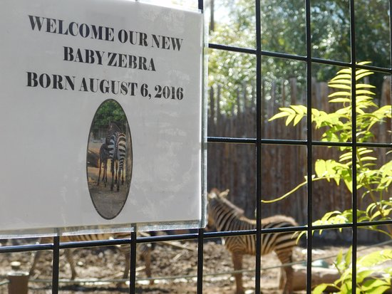 Idaho Falls Zoo at Tautphaus Park Foto