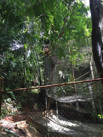 Gibbon Rehabilitation Project: photo0.jpg