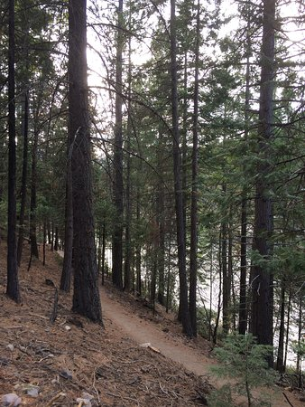 Mount Shasta Resort: photo3.jpg