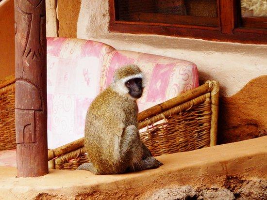 Amboseli Sopa Lodge: These cute little guys were everywhere!