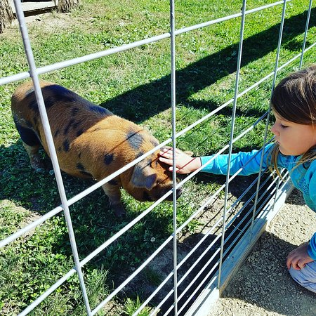 Stoughton, WI: Eugster's Farm Market