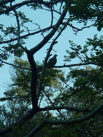 Parque Municipal Vivero Cosme Argerich: Nos vigila y desea que nos vayamos para descansar en su nido.
