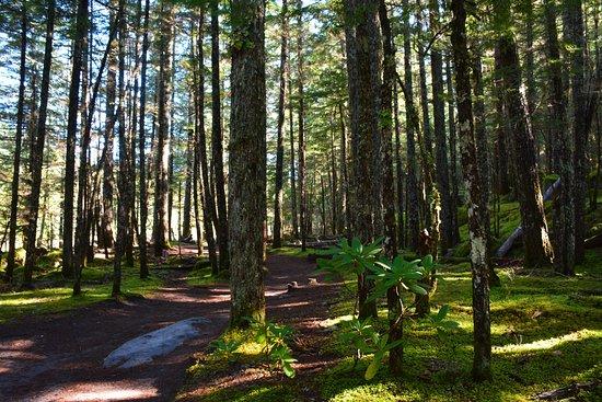 Rhododendron, Орегон: serene walk