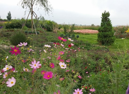 Zhangye, Cina: beautiful flowers