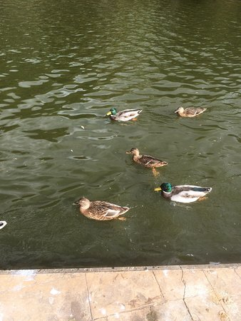 Cleethorpes Boating Lake: Lovely birds at the boating lake. They eat out of your hand and you can buy bird feed from the b