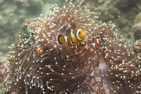 Bubba Diving Phuket 이미지