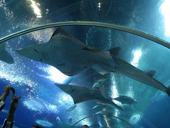 Underwater World Pattaya - Picture of Underwater World Pattaya, Bang Lamung -...