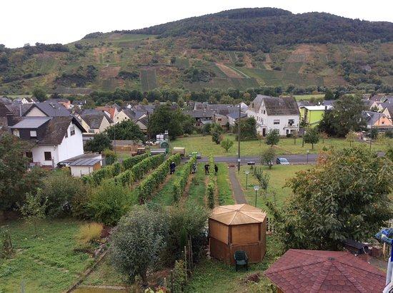 Wintrich, เยอรมนี: Druivenpluk aan achterzijde hotel