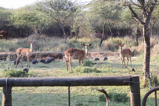 Louis Trichardt, Южная Африка: Game Viewing