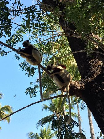 Anjajavy L'Hotel: Visitors while we are having lunch