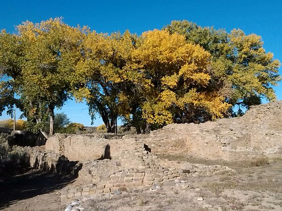 Aztec, NM: ruins with cottonwoods behind
