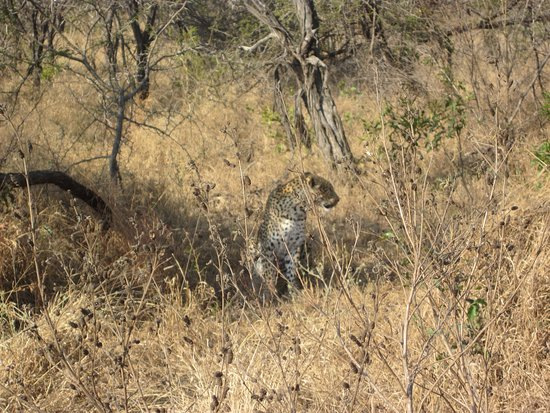 Nelspruit, South Africa: Leopard