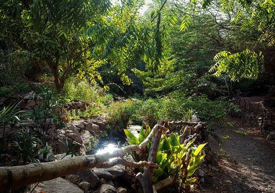 Botanical Garden Of Eilat : צולם על ידי מאי