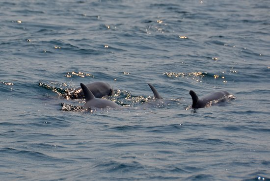 Tofo, Mozambique: Dolphins from the boat