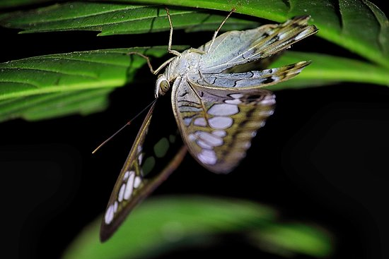Sleeping Butterfly During Night Trekking Picture Of Nature Lodge
