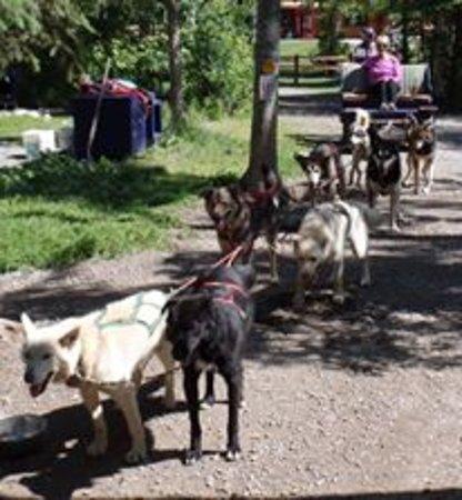 Wasilla, Alaska: summer cart